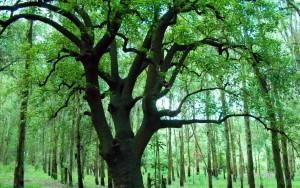 Ombuu_Tree_1920x1080